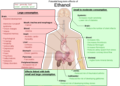 Alcoholism - Some of the possible long-term effects of ethanol an individual may develop. Additionally, in pregnant women, alcohol can cause fetal alcohol syndrome. Click the pic to see more... image from upload.wikimedia.org